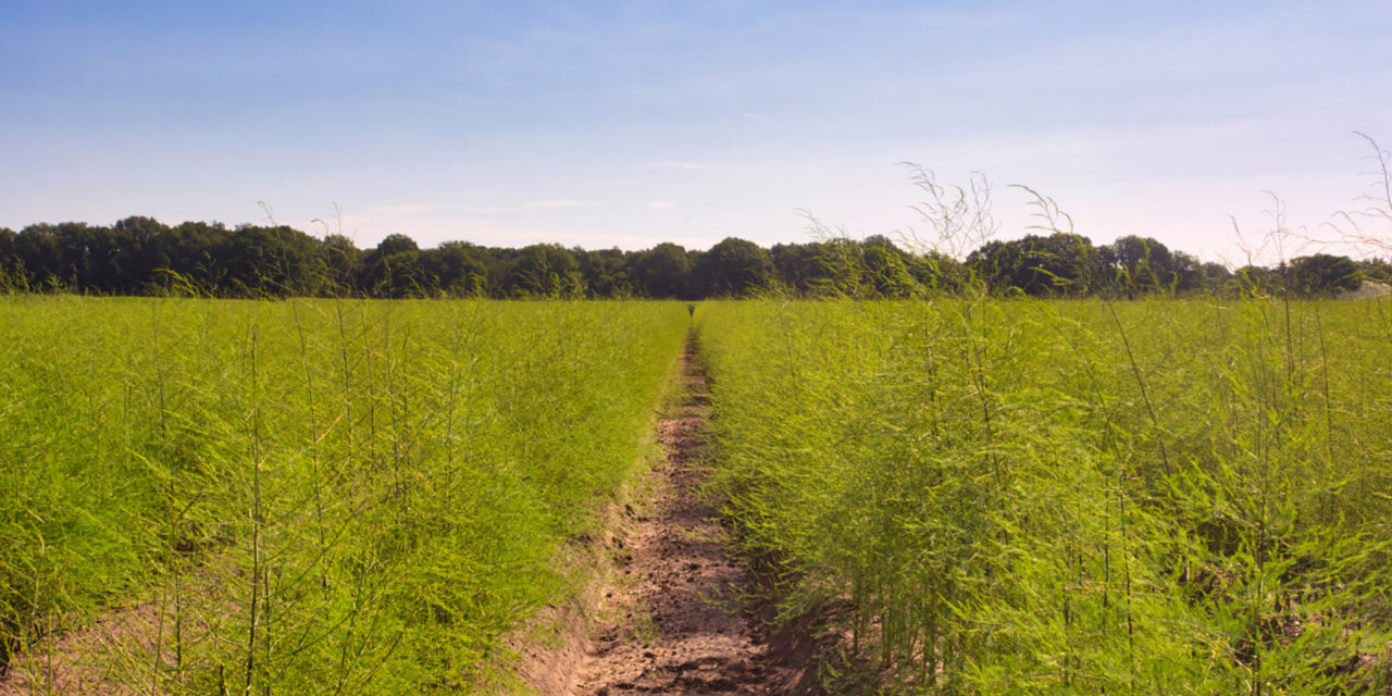 https://www.medinbio.com/wp-content/uploads/2021/02/header-asperge-sans-pesticide-medinbio-1-1280x640.jpg