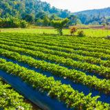 principes fondamentaux de l'agroécologie