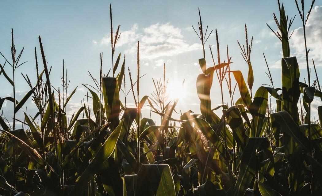 https://www.medinbio.com/wp-content/uploads/2021/05/agriculture-certificat-hve-1050x640.jpg