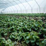 la certification de l'agriculture biologique en france