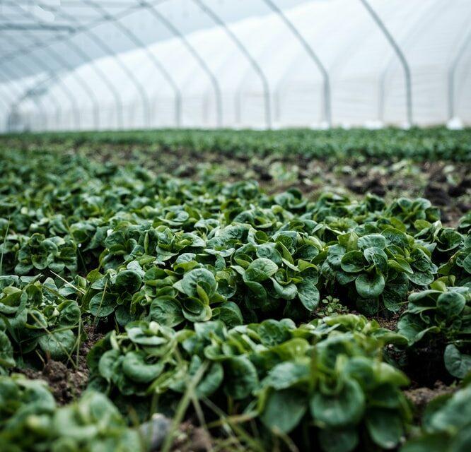 https://www.medinbio.com/wp-content/uploads/2021/05/certification-agriculture-biologique-en-france-666x640.jpg