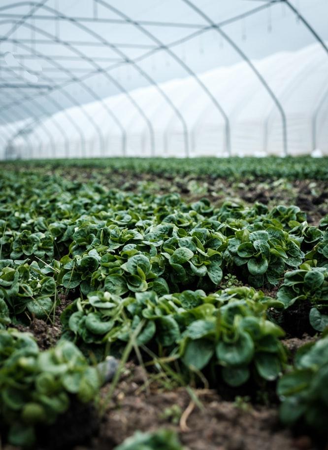 https://www.medinbio.com/wp-content/uploads/2021/05/certification-agriculture-biologique-en-france.jpg