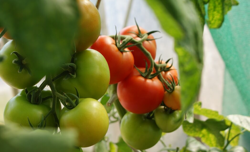 https://www.medinbio.com/wp-content/uploads/2021/05/legume-bio-sans-pesticide-certification-1047x640.jpg
