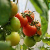certification legume bio