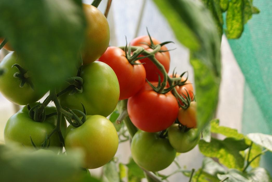 https://www.medinbio.com/wp-content/uploads/2021/05/legume-bio-sans-pesticide-certification.jpg