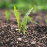 agriculture medinbio