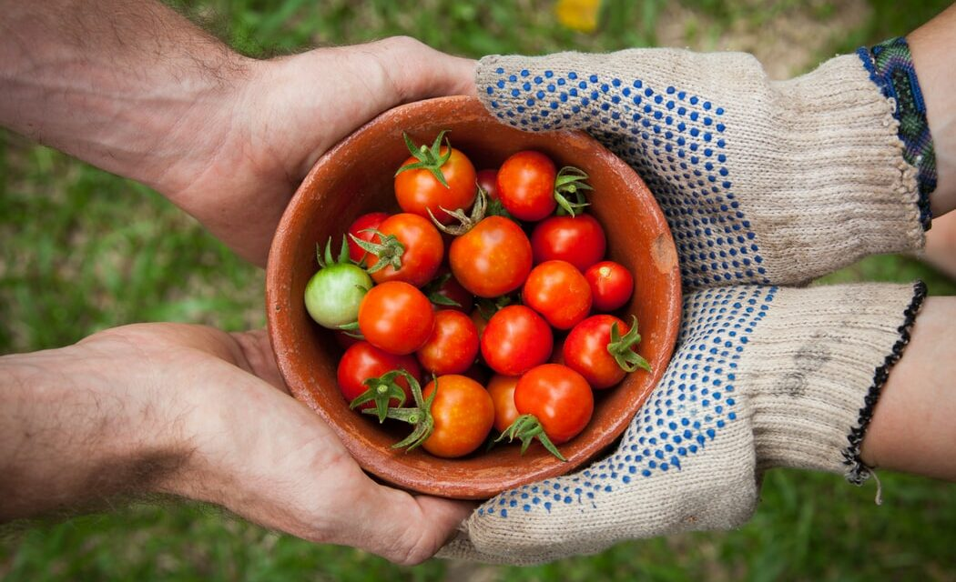 https://www.medinbio.com/wp-content/uploads/2021/06/exploitation-agricole-biologique-1050x640.jpg