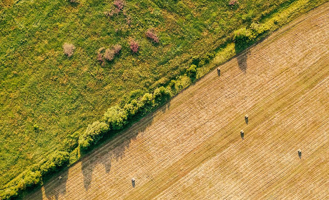 https://www.medinbio.com/wp-content/uploads/2021/07/Agriculture-reduire-son-empreinte-environnementale-1050x640.jpg